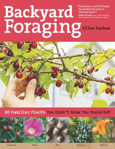 Backyard Foraging book by Ellen Zachos