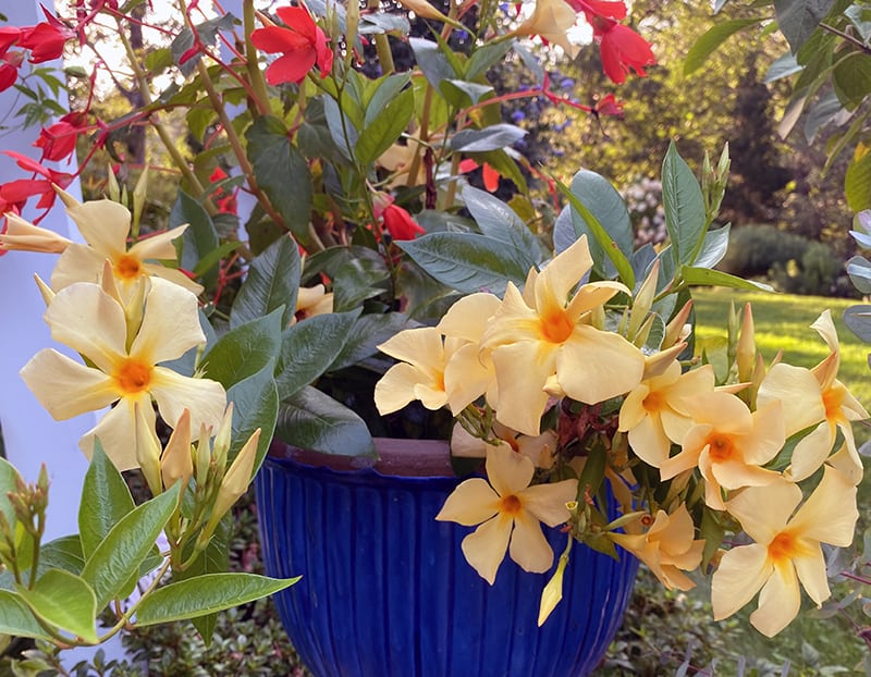 Saving Plants Through the Winter and Preserving the Harvest