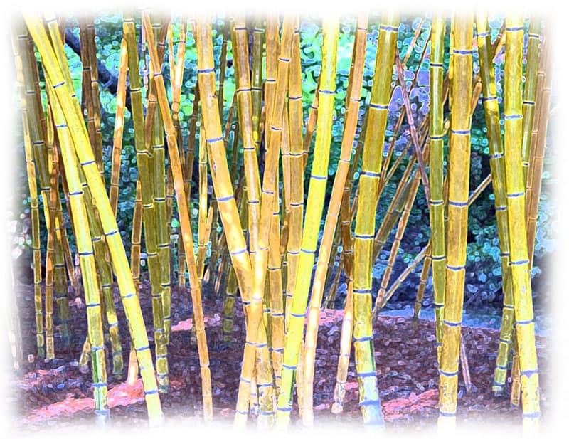 Box Store Plants, Bamboo and Saving a Money Tree