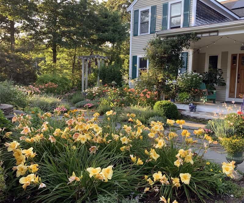Your Outdoor Office, a Deep Dive into Daylilies and Mosquitos