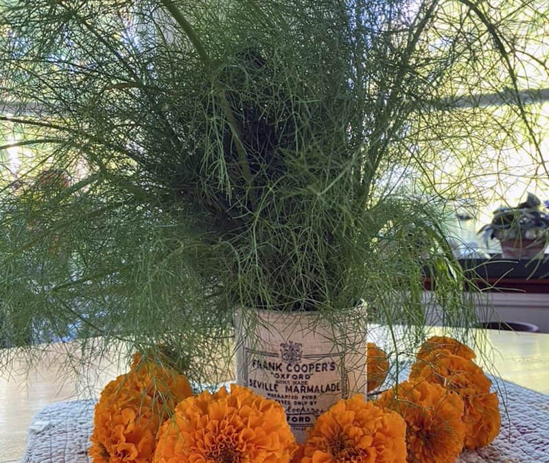 Fennel, Epiphytes and Pelleted Seed