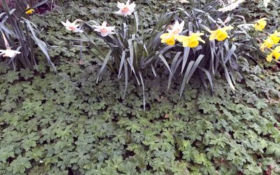 Deer or Rabbit Resistant Plants and More From Seattle