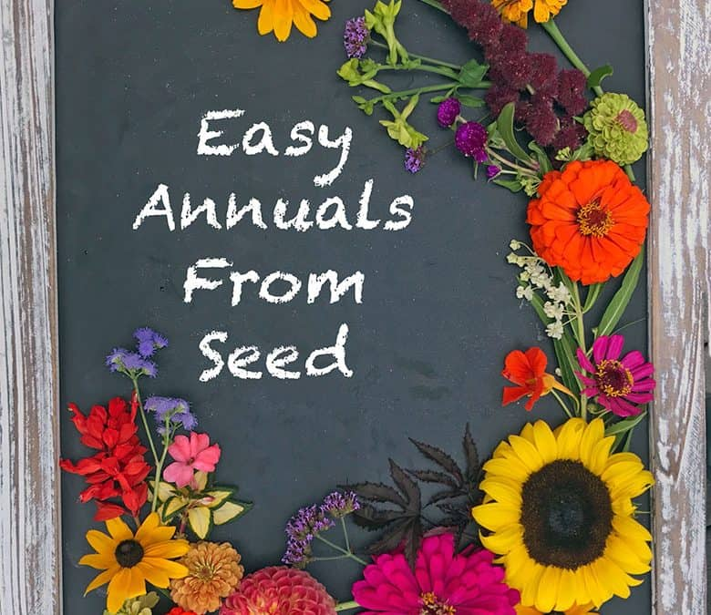Fritters, Easy Annuals From Seed and a Career Building Vacation