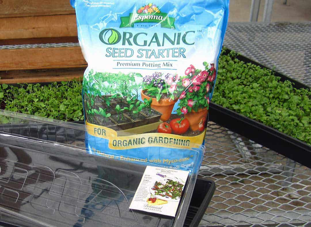 growing micro-greens at home