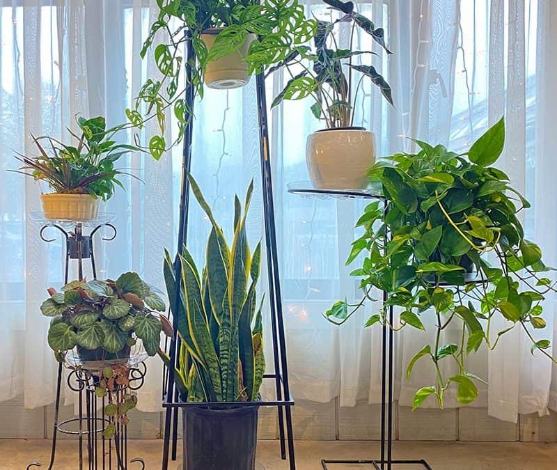 Root Stimulator, and Houseplants, Houseplants, Houseplants