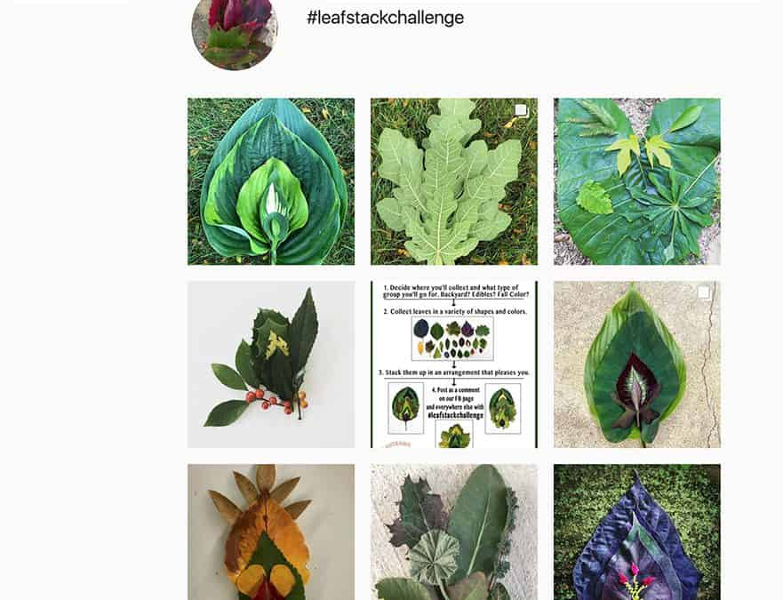 Plant Sex, Seeds for Birds and a Leaf-Stack Review