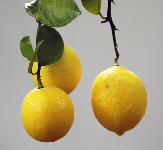 Foraged Lemons, A Bees Point of View, and Pruning Roses