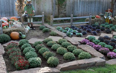 Leeks, Fall Mums, and Why Plants in Pots Stay Smaller