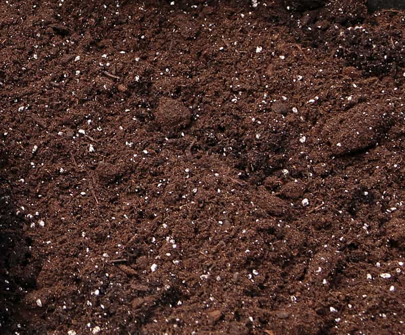 potting soil has white flecks that are perlite
