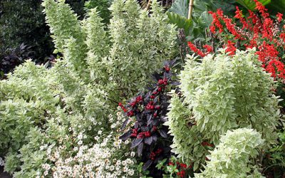 Drying the Harvest, Perennial Garden Maintenance and Understudy Plants