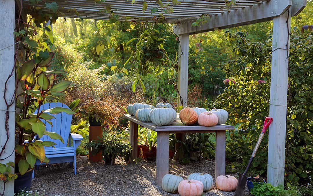 Foraged Walnuts, Winter Protective Mulch, and Secrets From The Pumpkin Patch