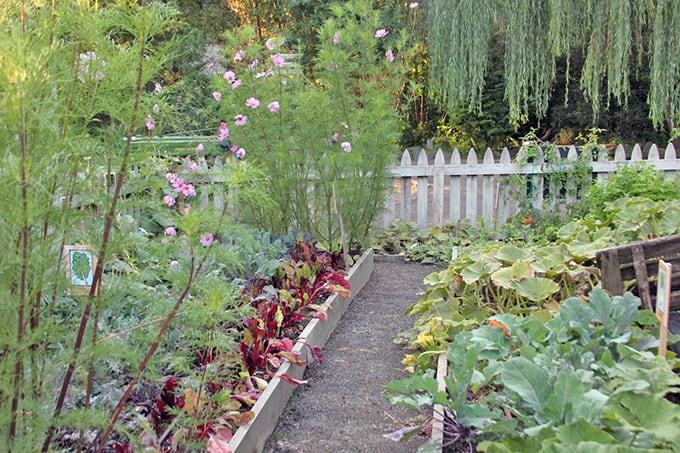 Signature Weeds, Raised Beds, and Black Walnut Myths