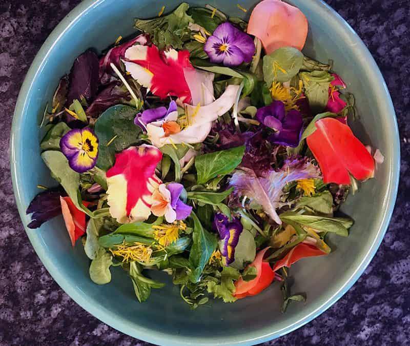 Spring Tonic Salads, Lemon Balm Herb, and Coconut Coir
