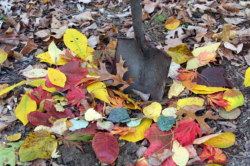 Mint, Outdoor Pots in Winter, and Transplanting in Fall