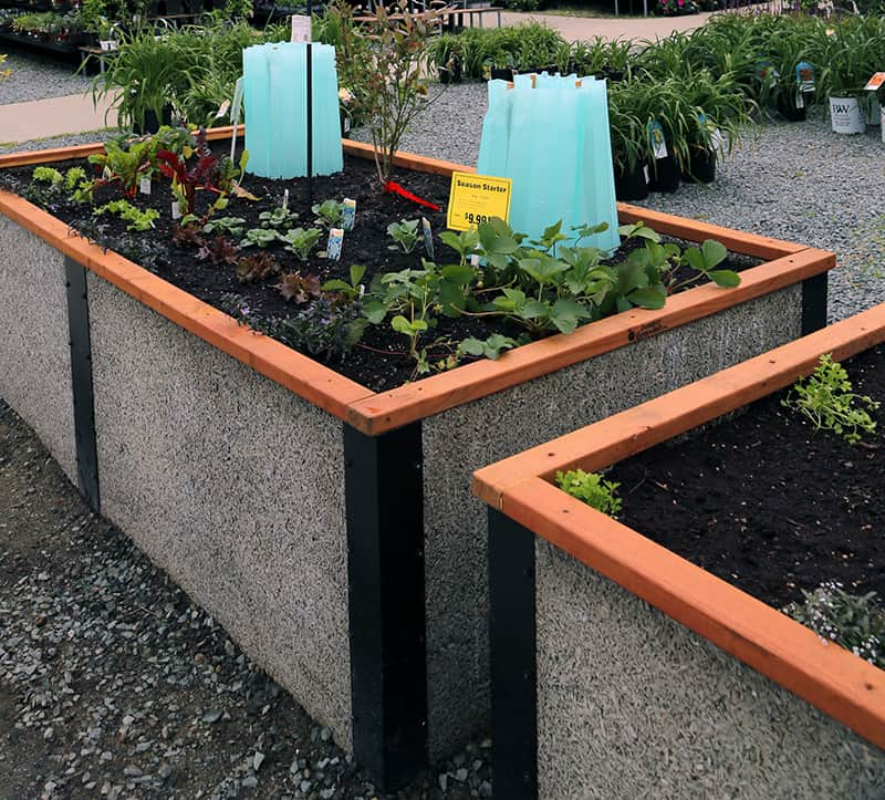 Blue plastic structures that get filled with water to protect plants.