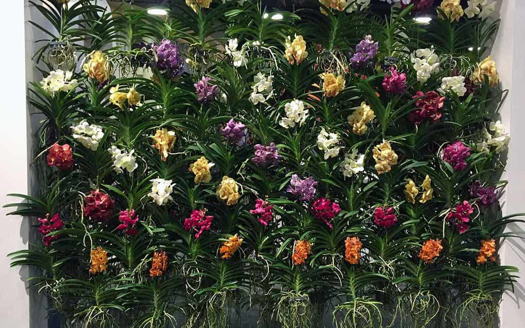 Amaryllis, Breathing Room, and the Art, Science and Dinner of Orchids