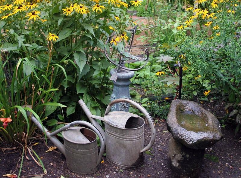 Fall Purees, Watering and Pesky Black Gnats