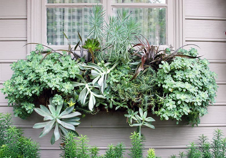 Windowboxes, Easy Vegetables from Seed, and Bad Garden Advice